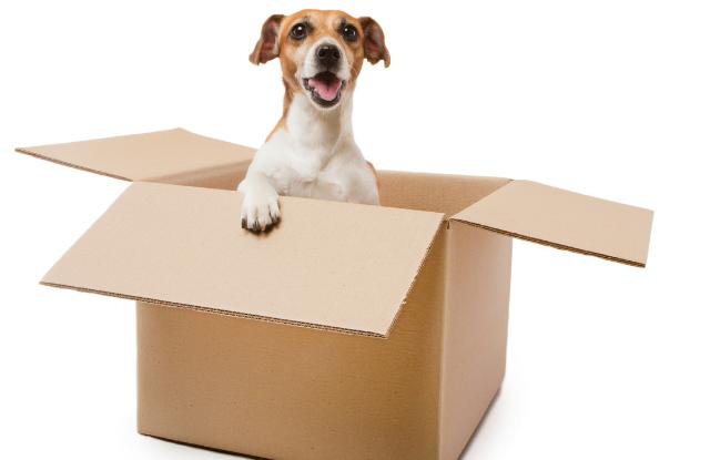 Dog in Cardboard Box